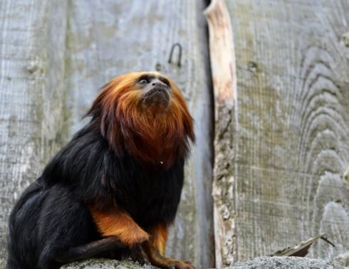 Zoo Boissière du Doré (15)