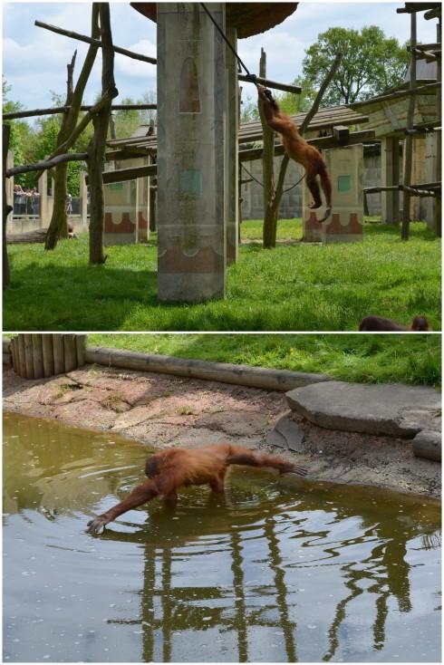 Zoo Boissière du Doré (31)